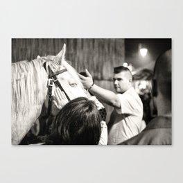 white horse Golega Canvas Print