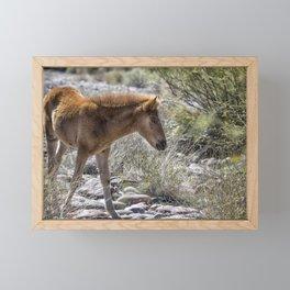 Salt River Wild Foal Framed Mini Art Print
