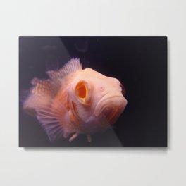 Kiss a Fish Metal Print