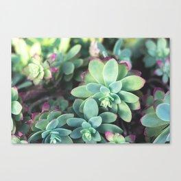 Green Roses Canvas Print