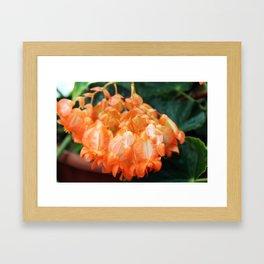 Hanging Orange Framed Art Print