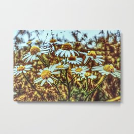 Margeritas Flower in a Field Metal Print