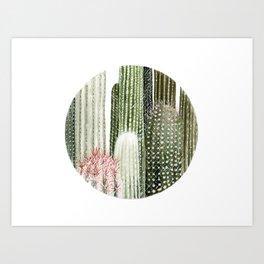 Circular Cacti Art Print