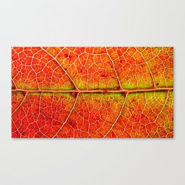 Maple Canvas Print
