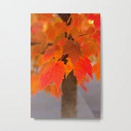 Autumnal Epitome Metal Print