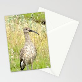 Watercolor Bird, Whimbrel 03, Flotshlid, Iceland Stationery Cards