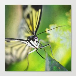BFX | woodnymphomania SQUARE (butterfly) Canvas Print