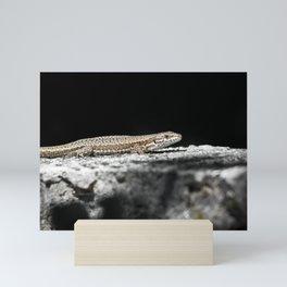 Common Lizard warms in the sun Mini Art Print