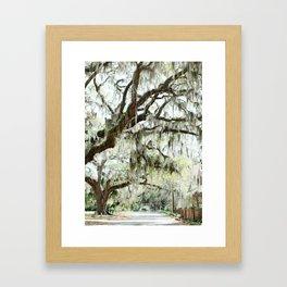 Southern Spanish Moss Framed Art Print