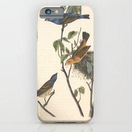 Vintage Print - Birds of America (1840) - Blue Song Grosbeak iPhone Case