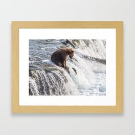 Young grizzly bear sits at waterfall Framed Art Print