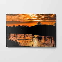 Silhouetted Canadian Geese taking a break in a pond in Ann Arbor, Michigan Metal Print