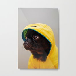 Cute Pug in Raincoat (Color) Metal Print
