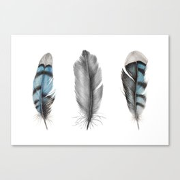 Blue Jay Feathers | Bird | Animal | Painting | Art | Animals Canvas Print