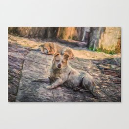 Two dogs resting Canvas Print
