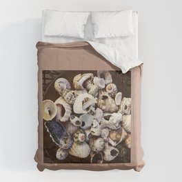 Shell Collection Comforters