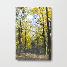 Into the Woods, My Darling Metal Print