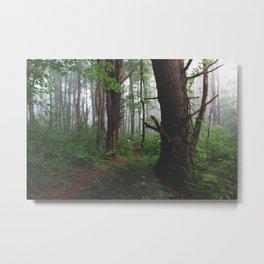 Forest Trail XVIII Metal Print