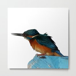 Colorful Kingfisher Vector Metal Print