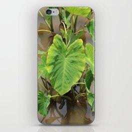 Pū Kalo iPhone Skin