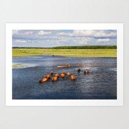 Natural bucolic view in Biebrza wetland Art Print