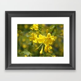 Fragrant Yellow Flowers Of Carolina Jasmine Framed Art Print
