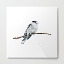 Gray Jay by Teresa Thompson Metal Print