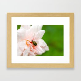 Cucumber Beetle & Winter Rose Framed Art Print