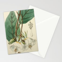 Edwards' Botanical Register Stationery Cards