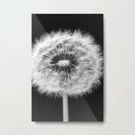 missing dandelion Metal Print