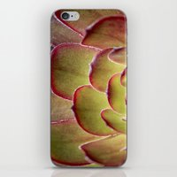 succulent iPhone & iPod Skins featuring Succulent by Shy Photog