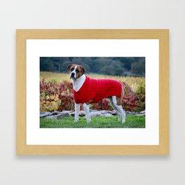 Dog in Red Sweater Framed Art Print