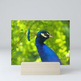 Peacock Face (Pfau) Mini Art Print