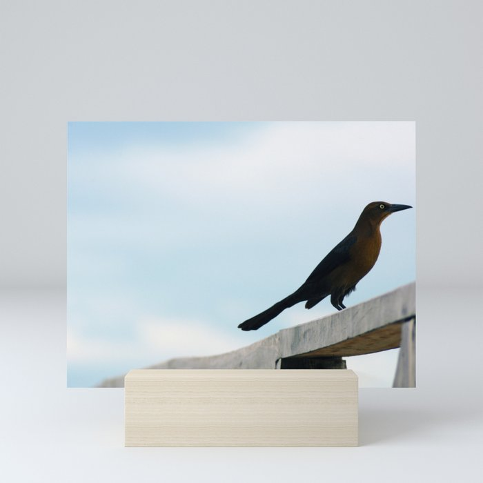 Bird collection _ 01 Mini Art Print