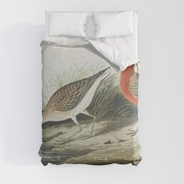 Pigmy curlew from Birds of America (1827) by John James Audubon etched by William Home Lizars Comforters