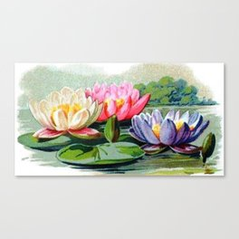 Vintage Lily Pad Floral Pond Lilies Canvas Print