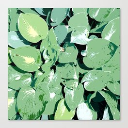 Hosta 01 Canvas Print