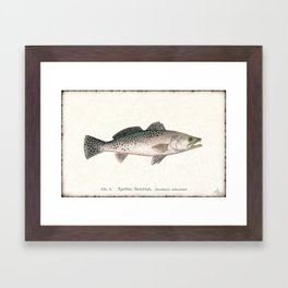 """""""Spotted Sea Trout"""" by Amber Marine - Cynoscion nebulosus ~Watercolor Illustration, (Copyright 2013) Framed Art Print"""
