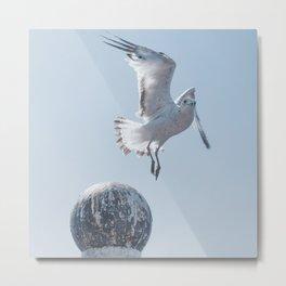 Seagull Taking Flight Metal Print