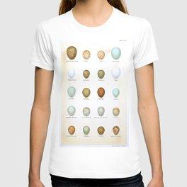 Vintage Bird Eggs  T-shirt