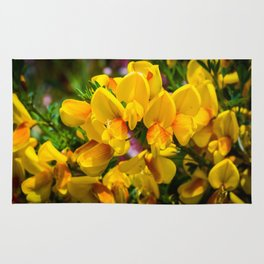 Scotch Broom Rug