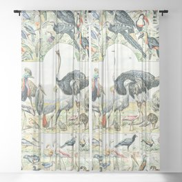 Exotic Birds // Oiseaux II by Adolphe Millot XL 19th Century Science Textbook Diagram Artwork Sheer Curtain