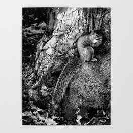 The Squirrel and the Tree King Poster