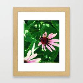 Polinize Framed Art Print