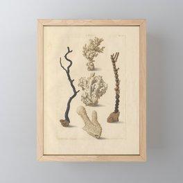 Naturalist Coral Framed Mini Art Print
