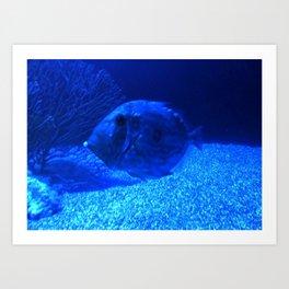 Marine Life 06 Art Print