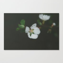 out of the gloomth Canvas Print