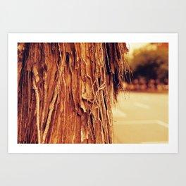 SHEDDING - Fuji Superia 400 Redscale - 35mm film Art Print