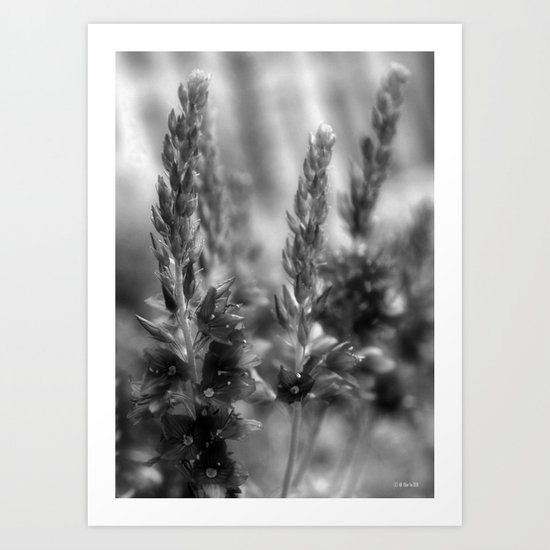 Brilliantly Blue Flowers... In Black and White Art Print