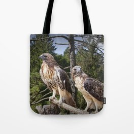 Pair of Red-tail Hawks Tote Bag